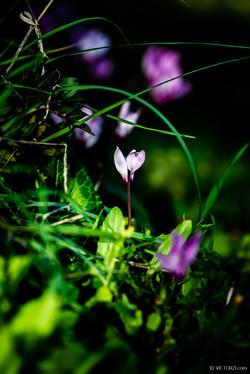 20210202 - Flowers at Emek Haela - 08371