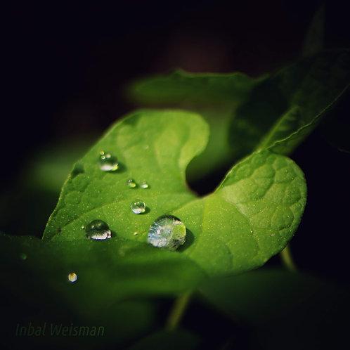 מאסטר קלאס - צילום טבע אפל