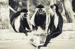 20190921 - Monkeys in Ben Shemen - 1649.