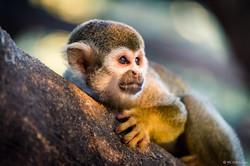 20190921 - Monkeys in Ben Shemen - 1803.