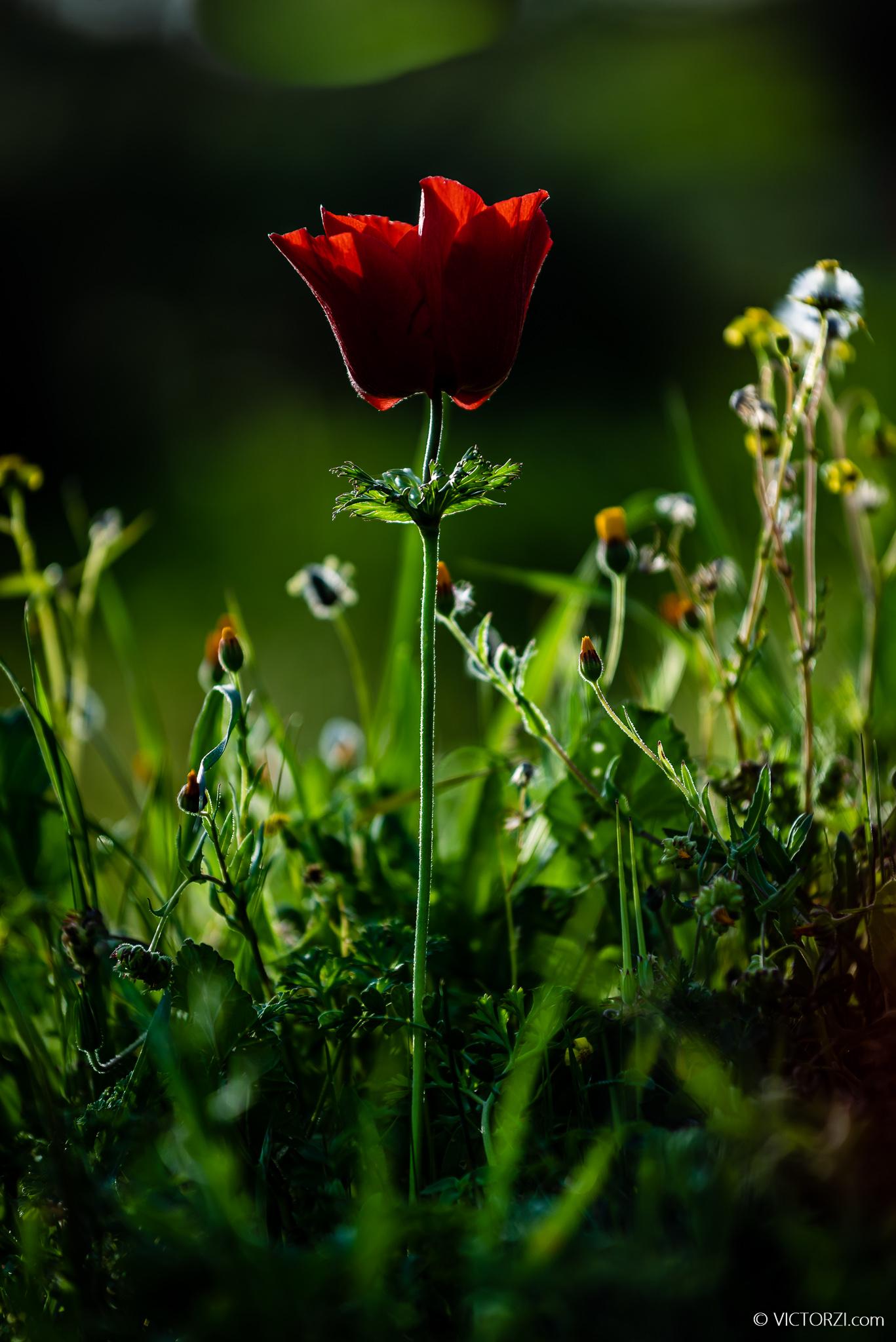 20210202 - Flowers at Emek Haela - 08440