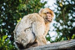 20191222 - Monkeys Sanctuary - PreWorksh