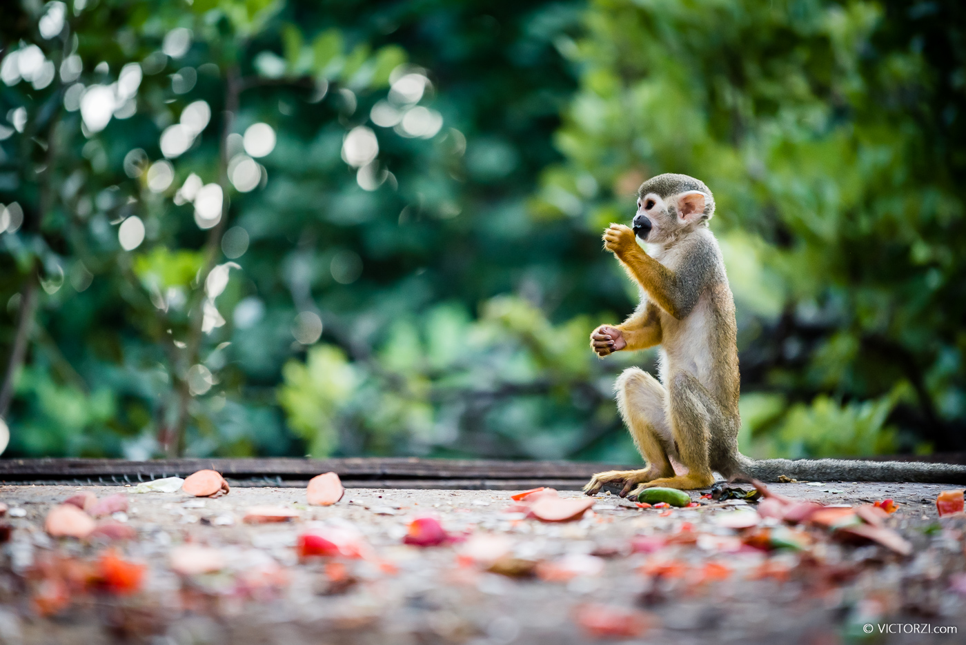 20190921 - Monkeys in Ben Shemen - 1759.