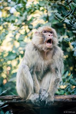 20190921 - Monkeys in Ben Shemen - 1733.