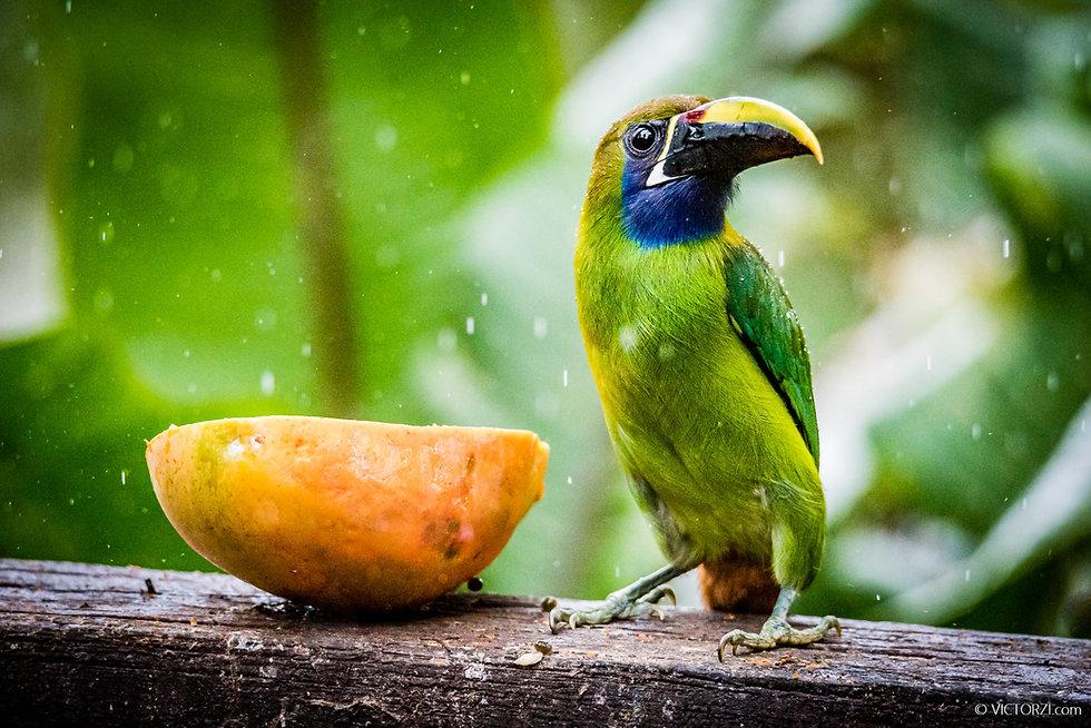20200307 - Costa Rica w PhotoTips - 1447