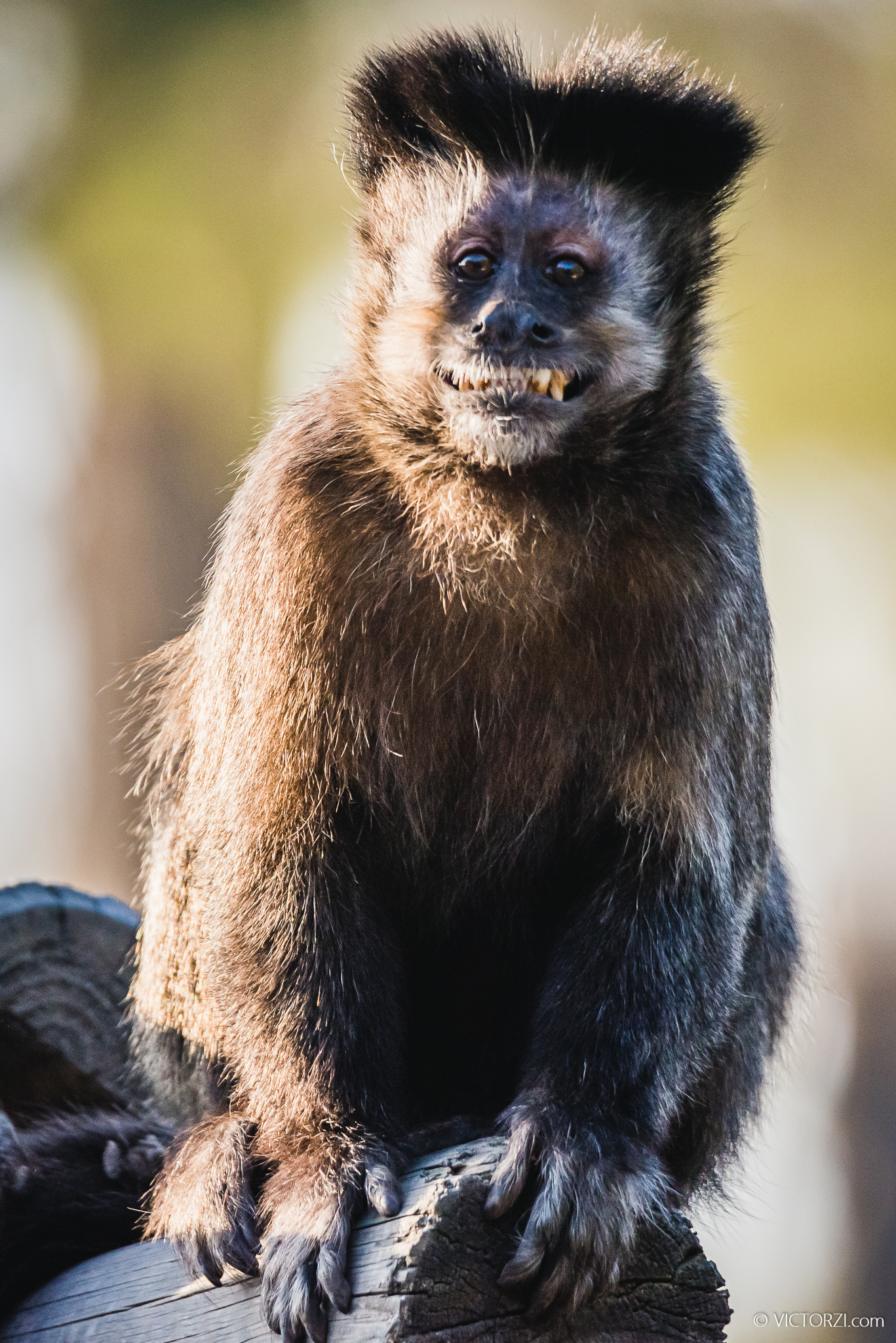 20191222 - Monkeys Sanctuary - PreWorksh