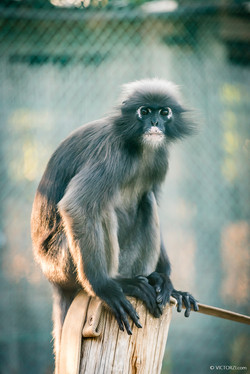 20190921 - Monkeys in Ben Shemen - 1729.