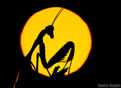 logo NadavBagim_Aliens (1)
