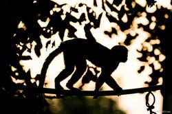 20190921 - Monkeys in Ben Shemen - 1817.