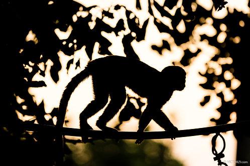 סדנת צילום קופים בשקיעה