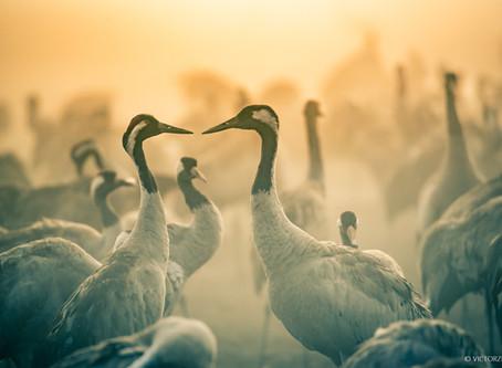 צילום ציפורים וטבע באגמון החולה - טיפים והמלצות