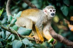 20190921 - Monkeys in Ben Shemen - 1800.