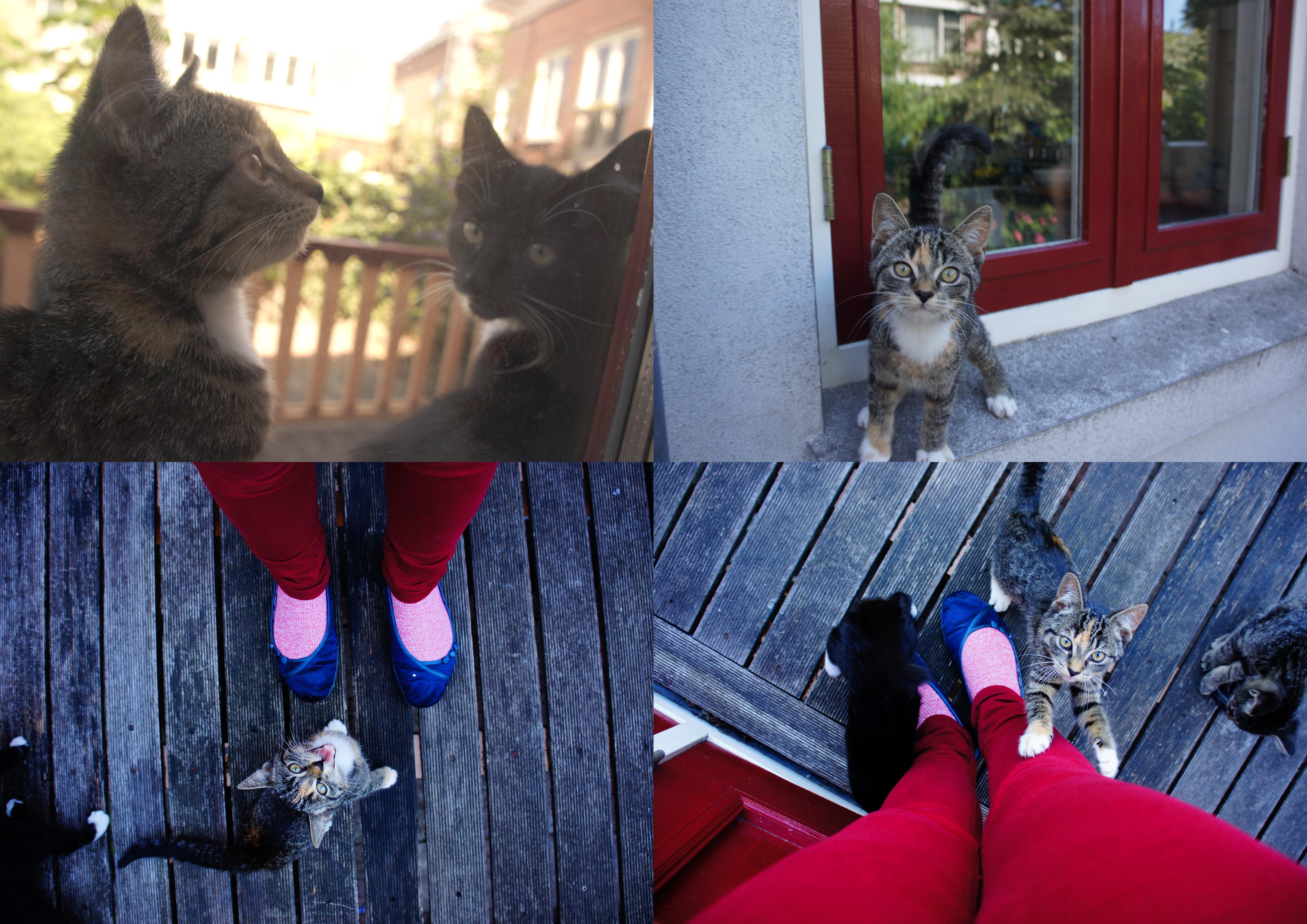 Kittens in Utrecht