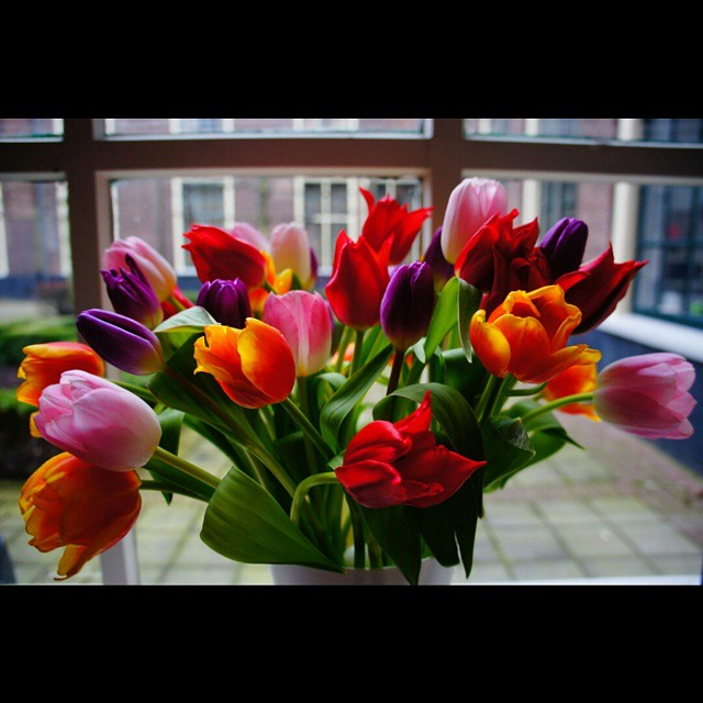 Tulips in Leiden