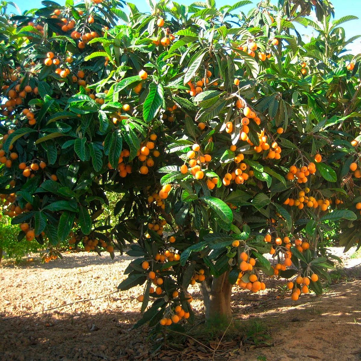 Oasis plantas centro de jardiner a y vivero alicante for Jardineria y plantas