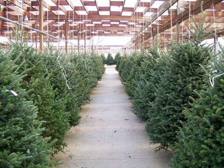 Merry Main Street Christmas Tree Lot