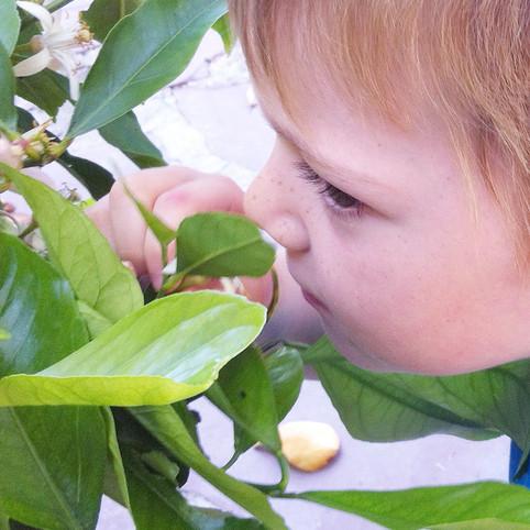 Chasse aux odeurs naturelles dans un jardin parfumé