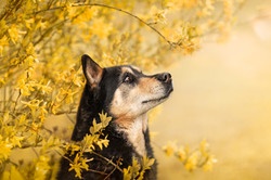 photo-chien-haute-marne