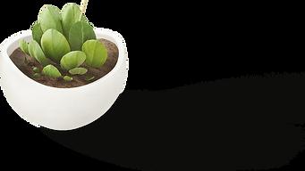 Plant-min.png