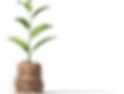 Plant_front.png