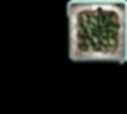 Plant_Teal_Pot_Top.png