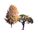 Trees_01.png