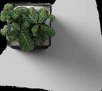 Plant_BlackPot_Top.png