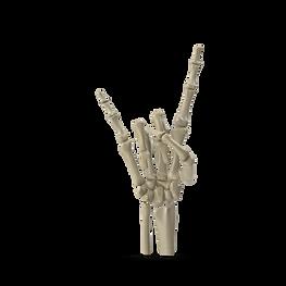 Posed Skeletal Hand.J02.2k-min.png