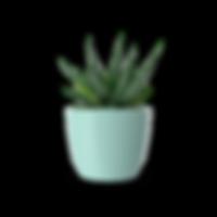 Succulent.I08.2k-min.png