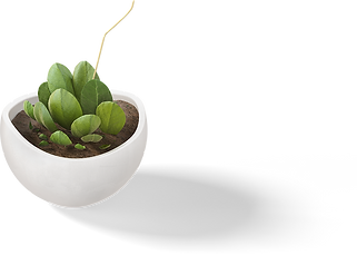 Plant-1.png