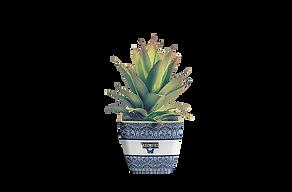 Green_Cactus_Axio.png