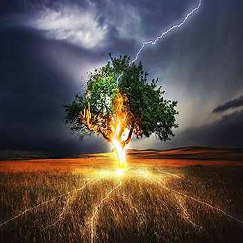 Lightning tree.jpg