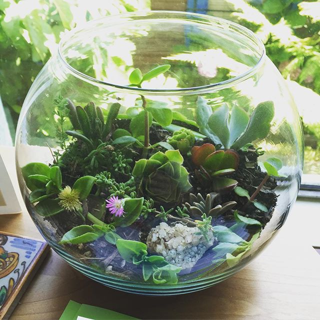 Instagram - Made this #terrarium for one of my #TerraVita clients who happens to be currently kickin