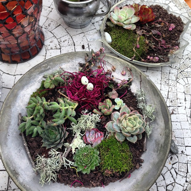 Instagram - And sometimes that sunshine comes from feeding ones obsession with making #succulent and