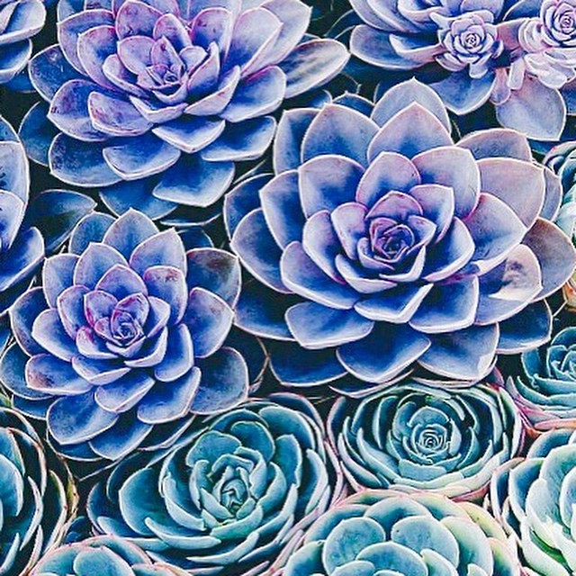 There's something so amazing about #succulents and #cacti ... Their #resilience and #beauty and need