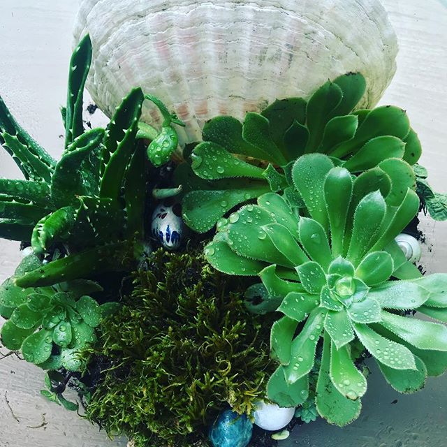 #terrarium magic 🌵✨🐚