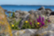 Vaasa_Kvarken archipelago stones&flowers