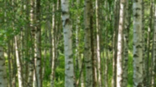 marimekko_woods Visit Finland.jpg