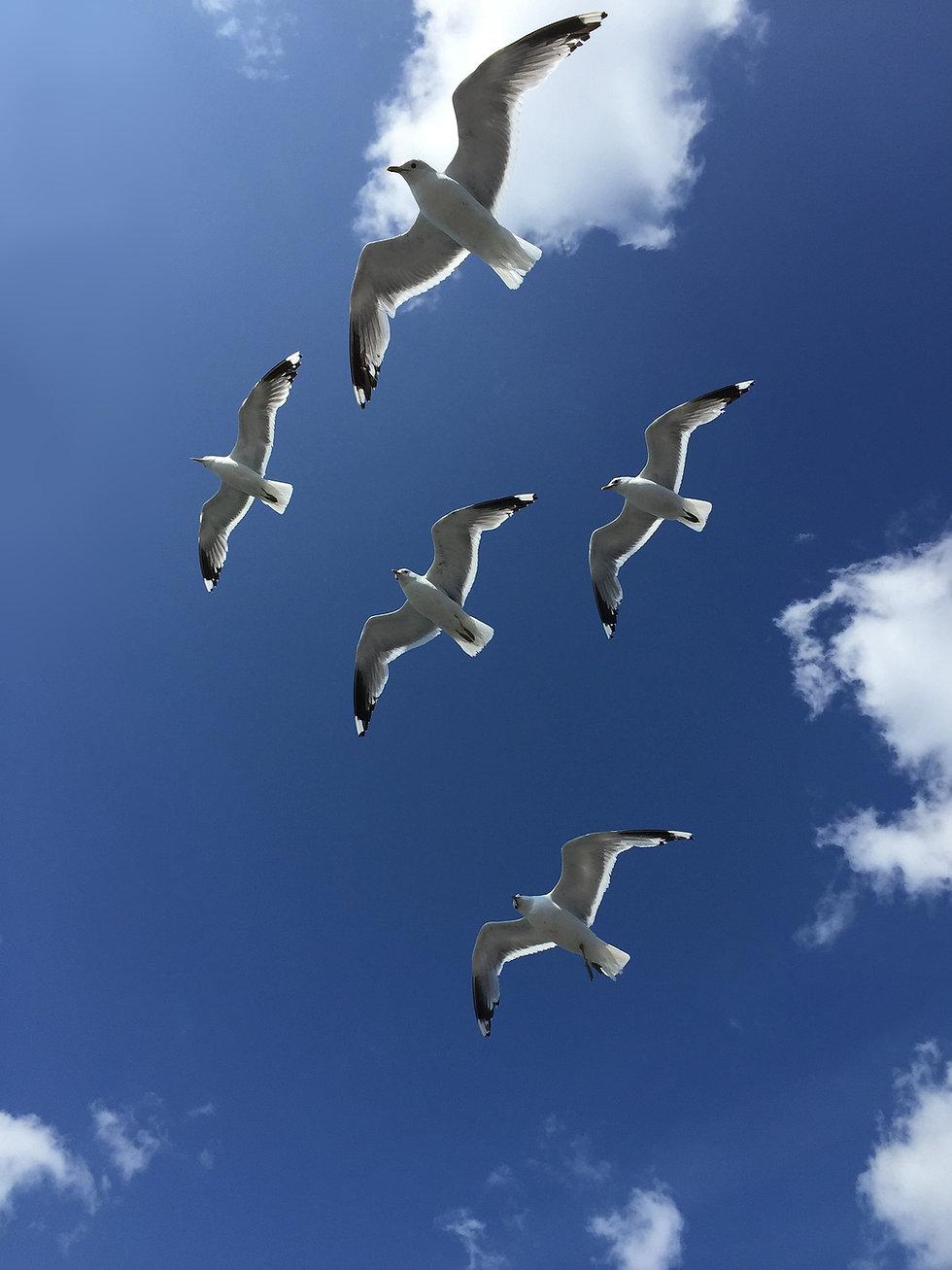 seagulls-1272916_1920 lokit pixabay.jpg
