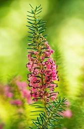 Bach flowers 2.jpg