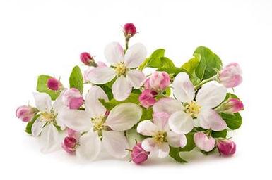 Bach Flowers 1.jpg
