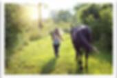 horse & Toxins 2.png