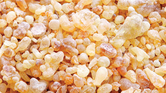 From Middle East till Europe: History of Frankincense