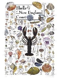 Shells &Beach Life of the New England Coast Puzzle