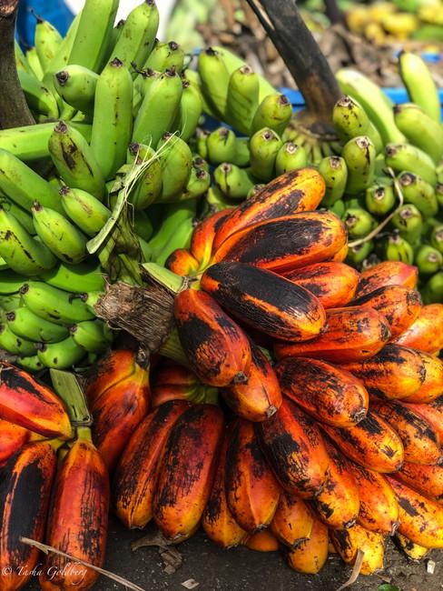 EOH Vanuatu-1-32.jpg