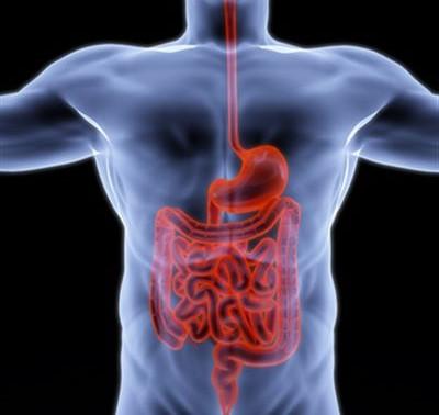 Le système digestif un rempart contre les virus
