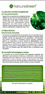 green flyer verso.jpg