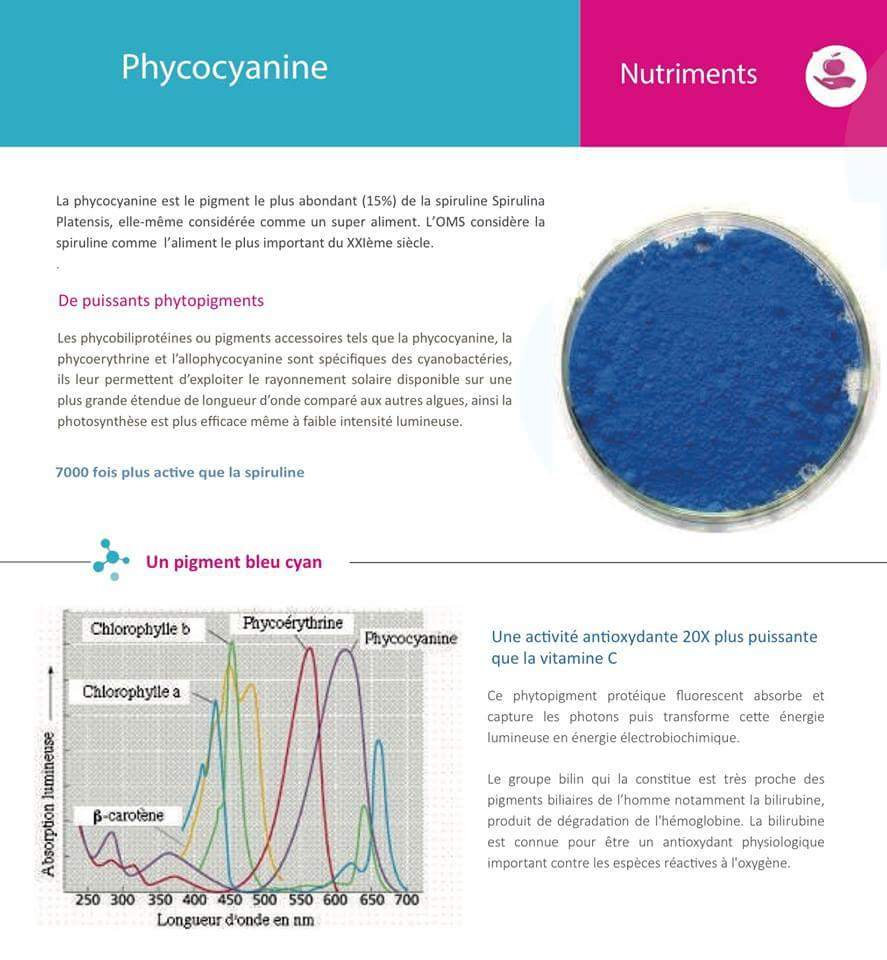 Phycocyanine spiruline photobioreacteur