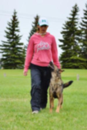 Metropawlitan Dog Training - Calgary Dog Training