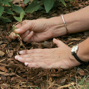 handweeding.jpg